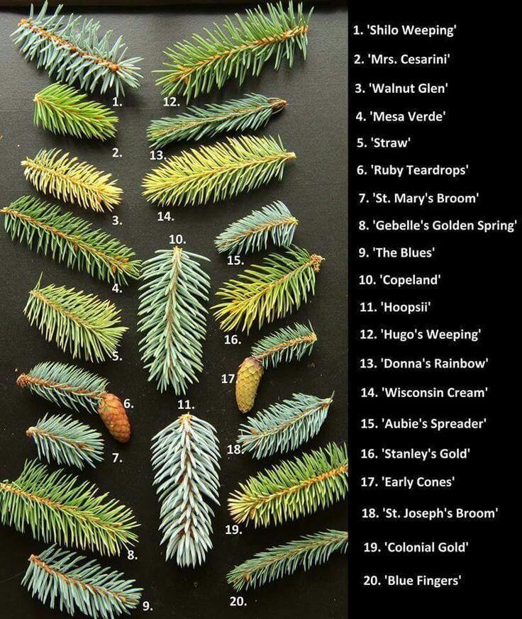 Zahrada-inspirace - Obrázek č. 168