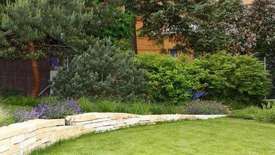 Pinus sylvestris 'Watereri', hortenzie latnatá - Hydrangea paniculata 'Grandiflora', brslen křídlatý - Euonymus alatus Compactum, šanta o
