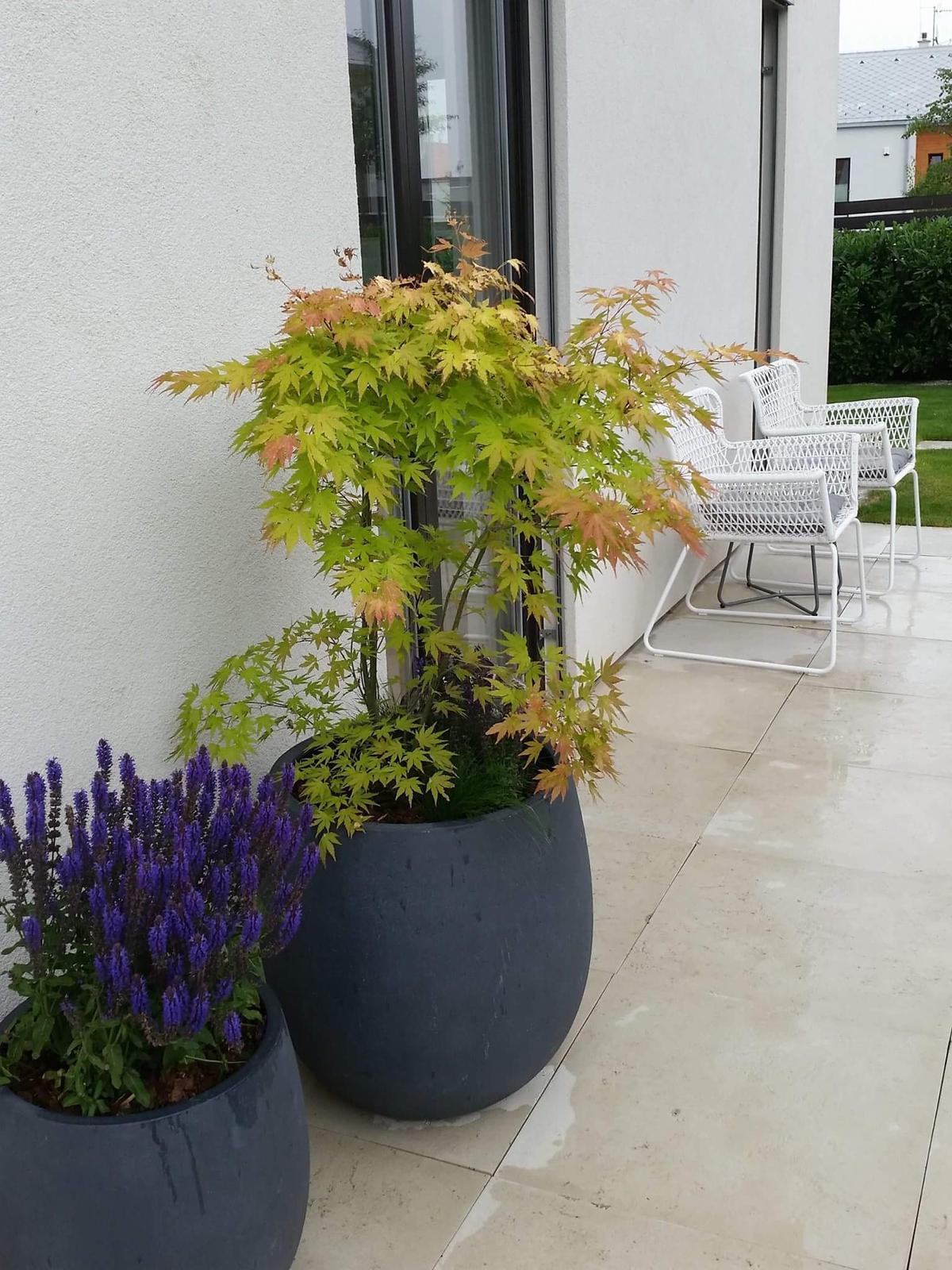 Zahrada-inspirace - Obrázek č. 222