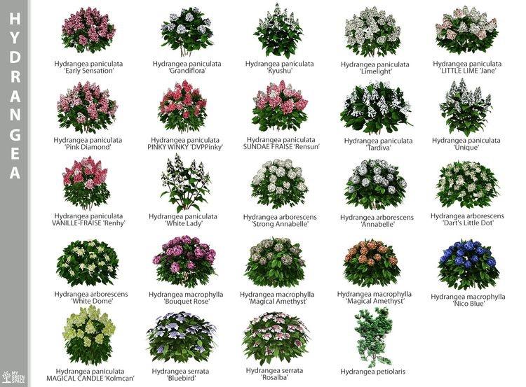 Zahrada-inspirace - Obrázek č. 278