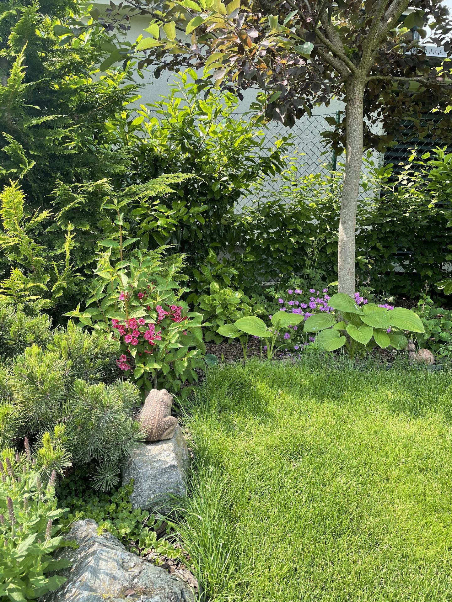 Zahrada 2021 - Obrázek č. 17