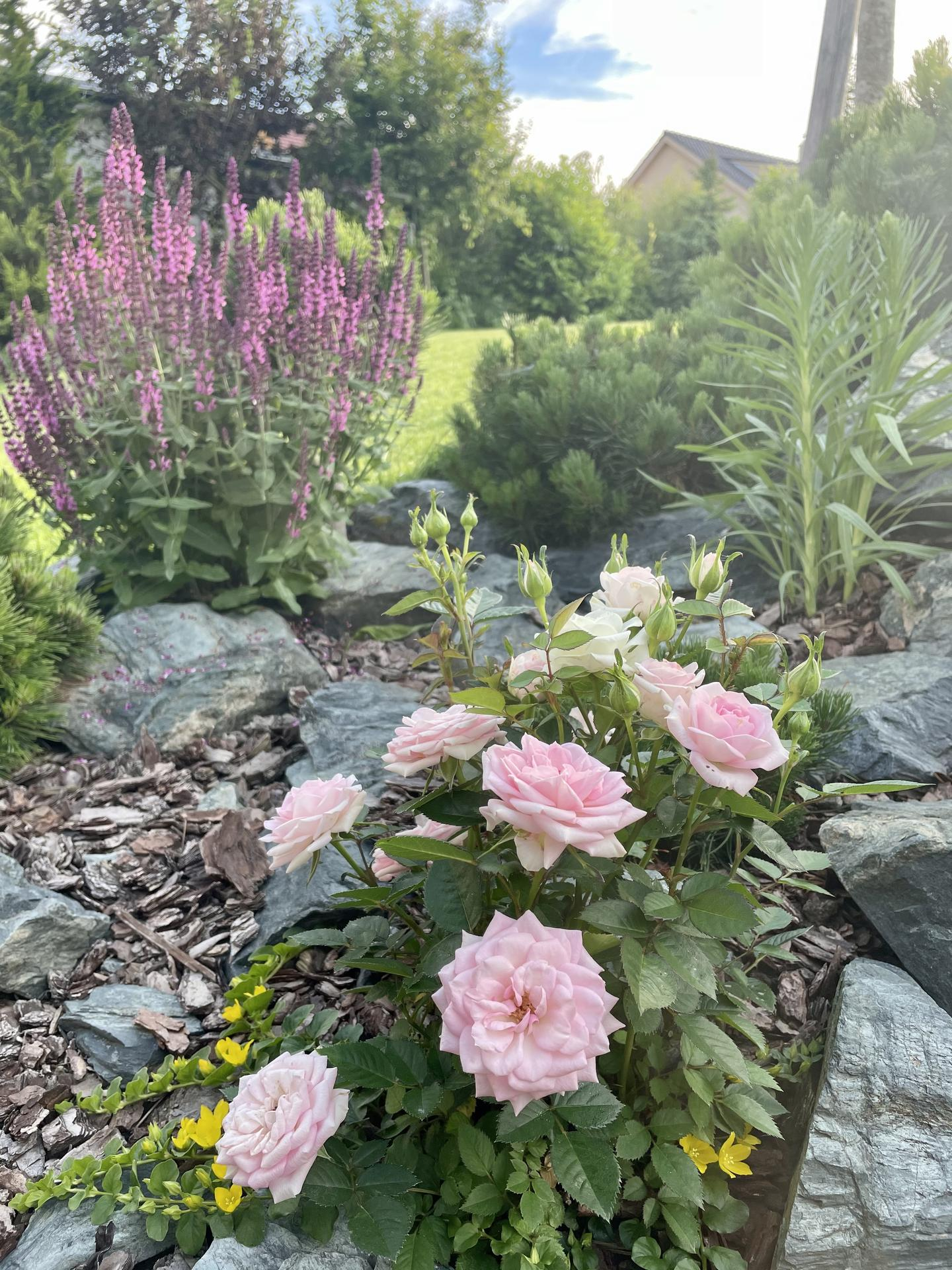 Zahrada 2021 - Obrázek č. 24