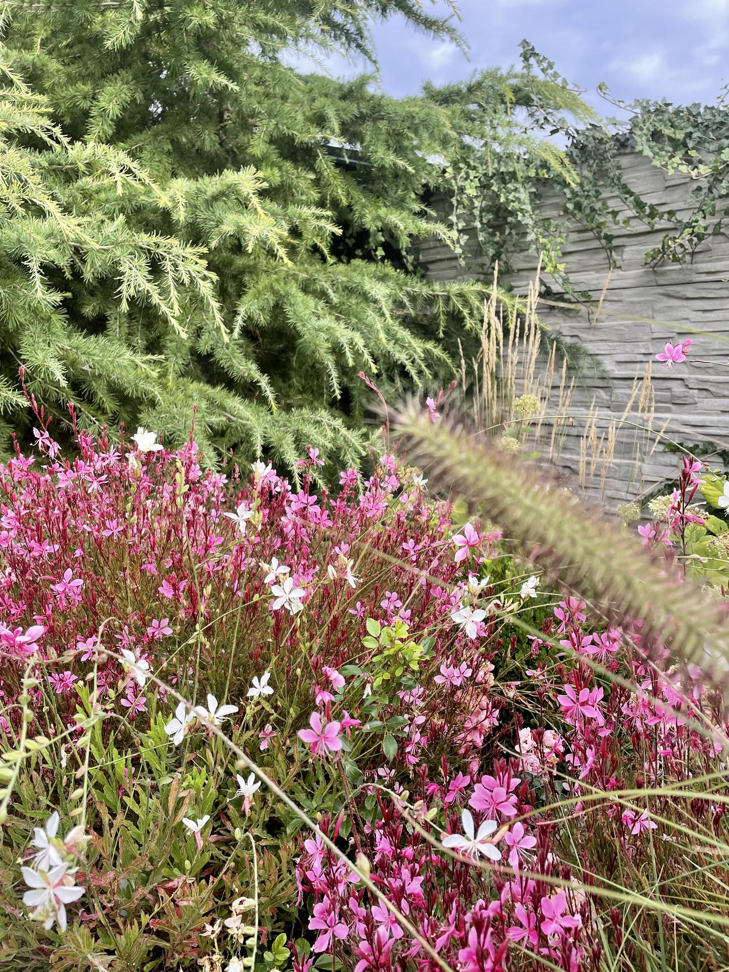 Zahrada 2021 - Gaury