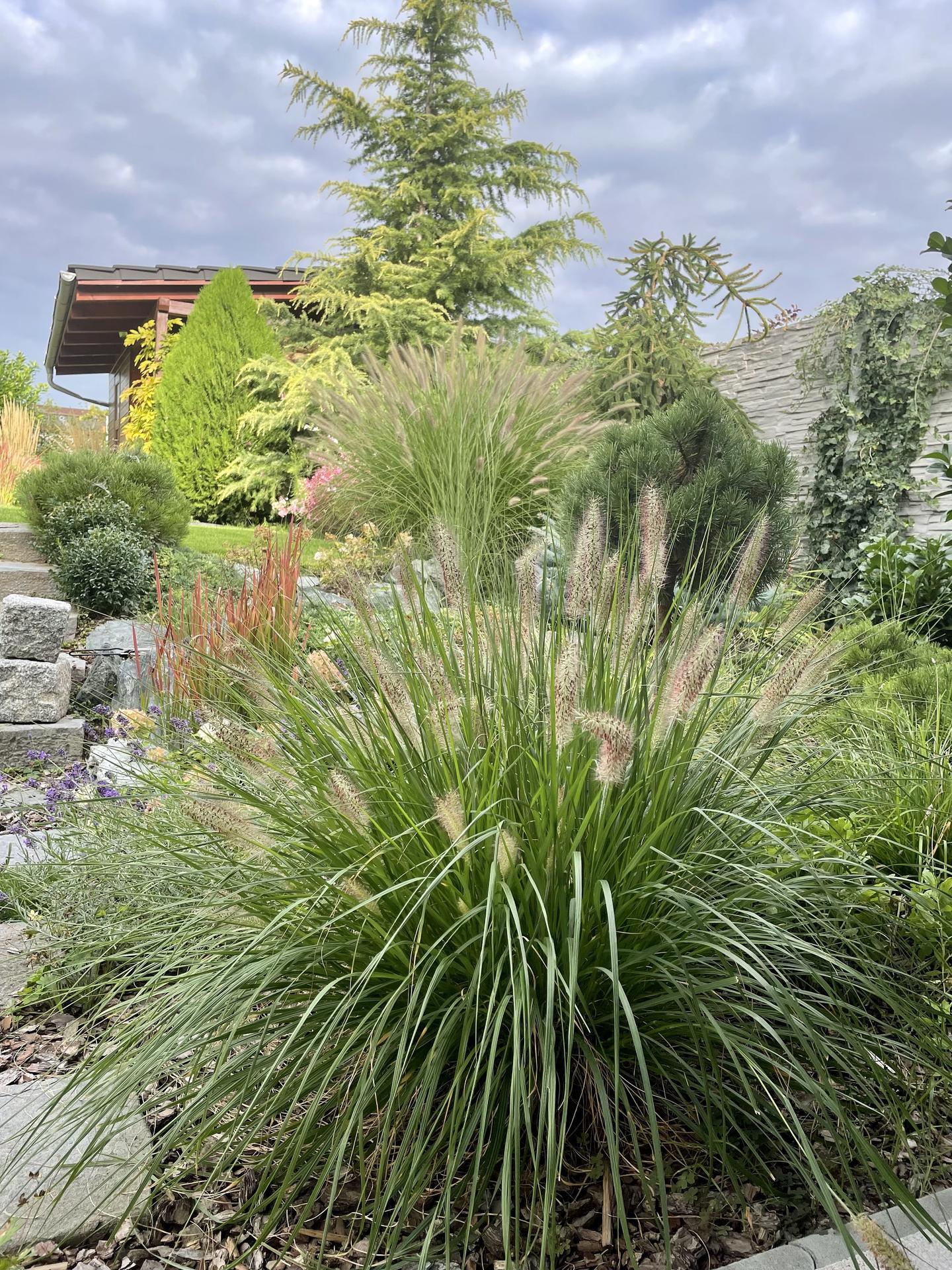 Zahrada 2021 - Obrázek č. 64