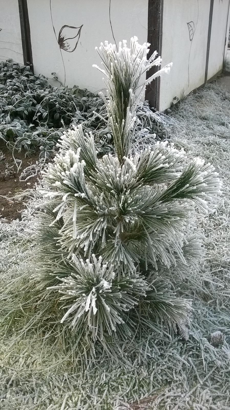 Zima 2017 - Obrázok č. 1
