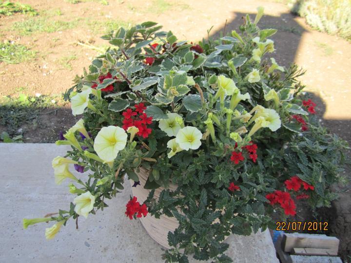 Bývame a dokončievame - moje kvetinky