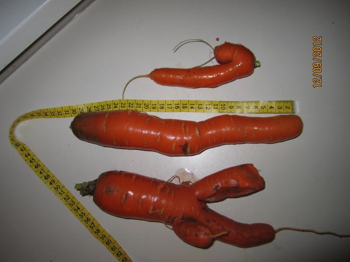 Bývame a dokončievame - akože čo budeme trocháriť! ked velke rajciny, tak snad nie male mrkvy! pche :-D