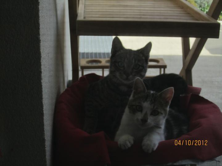 Bývame a dokončievame - Mali sme jednu cicu, mame dve. Bery nam z nebíčka poslal najprv najdúcha Cypriána a  nas najduch ma kamoša od susedov a stale su tu :)... laska obrovska, zlatí su :)