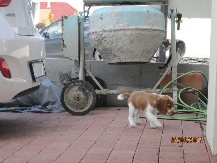 Bývame a dokončievame - dvaja tankisti a pes :-D