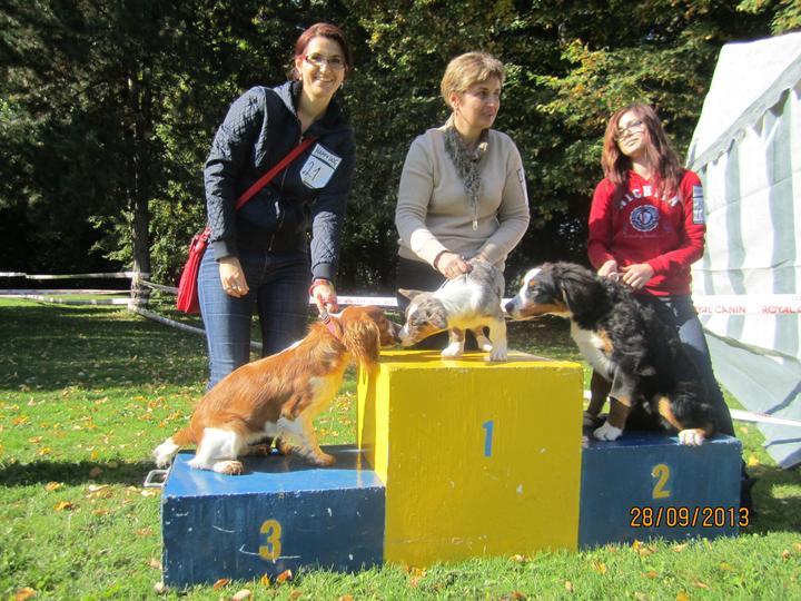 Bývame a dokončievame - Freuška ziskala 3.miesto na vystave psov ako Junior . ma presne 6. mesiacov.