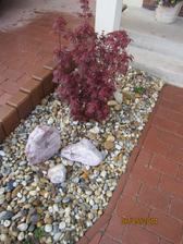 javor  Acer palmantum Shaina , bude malicky..  max. do  100cm x 75 š