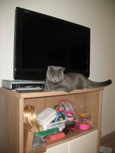 @bender111 tu je cica :)
