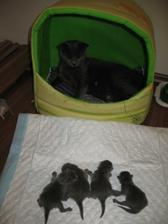 Co to ma byt? preco mam deti vonku?? dajte mi ich naspať! ( davala som ich po ukonceni porodu na cistu podložku....)