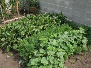 Rekord sadenia  roznych druhov zeleniny na tak malej ploche, aku sme mali na jar k dispozicii... :-D