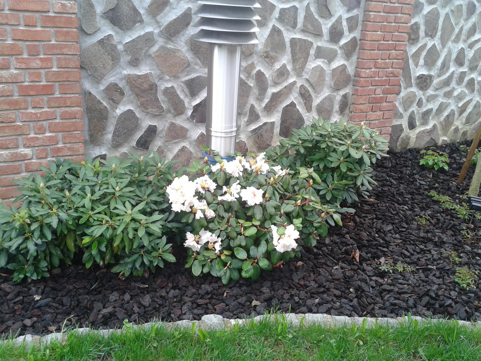 Exterier zahrada - Rododendron