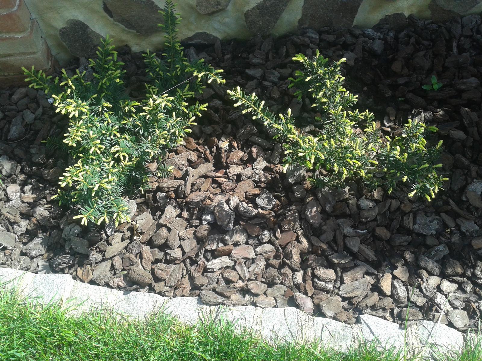 Exterier zahrada - Obrázok č. 10