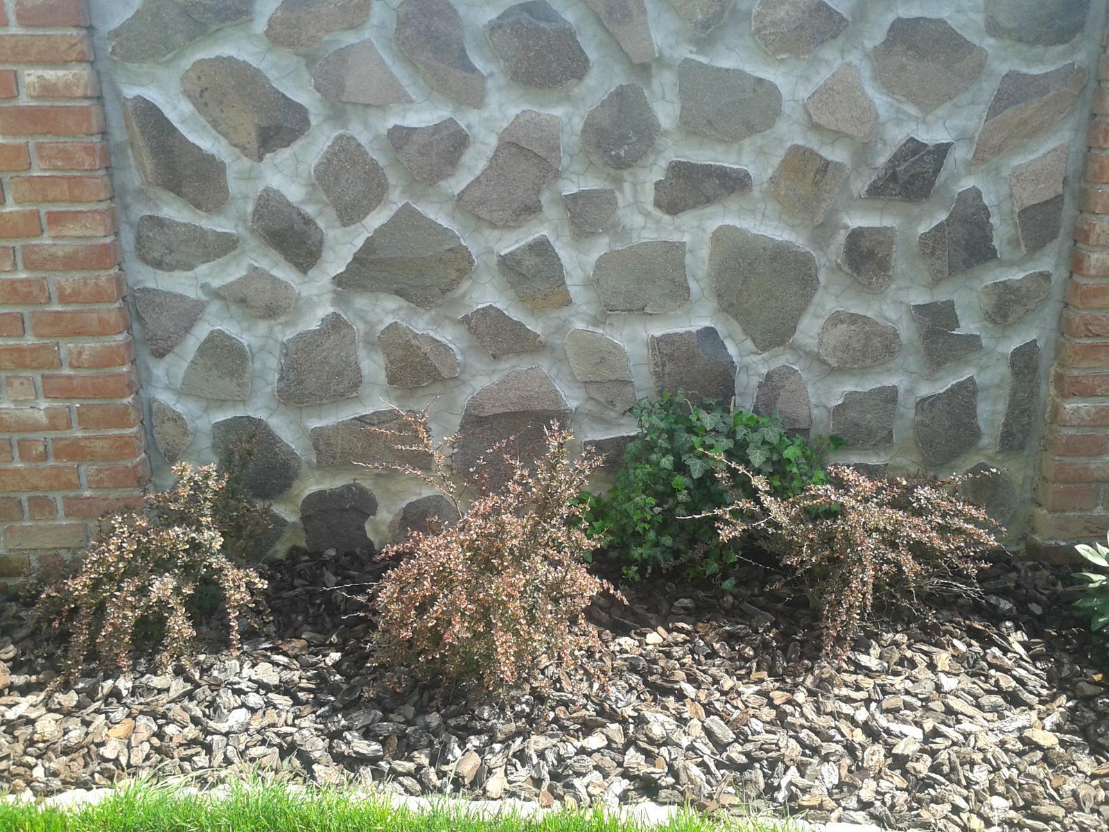 Exterier zahrada - Drač.