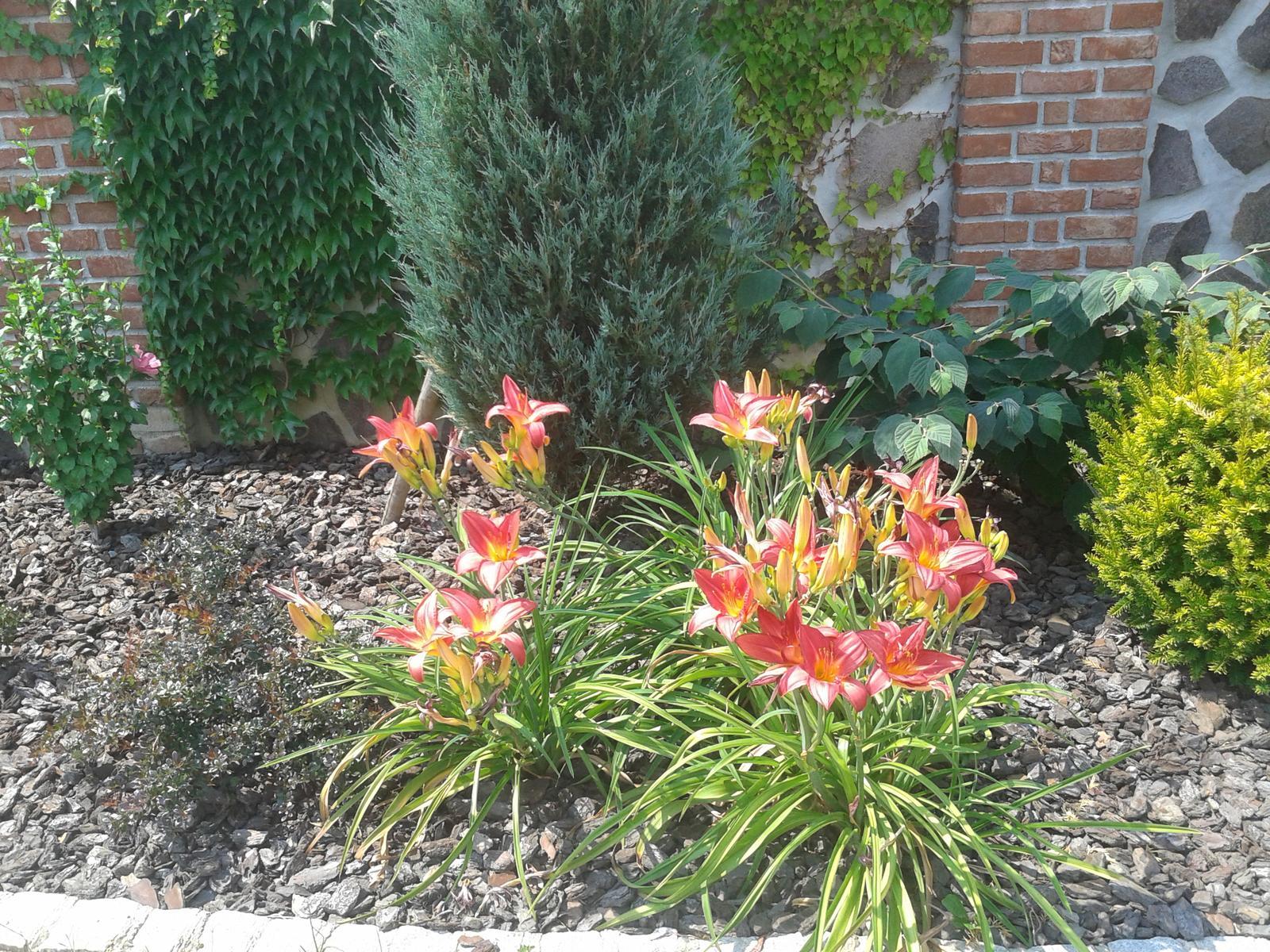 Exterier zahrada - Obrázok č. 55