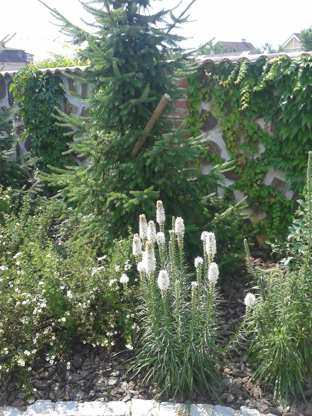 Exterier zahrada - Obrázok č. 56