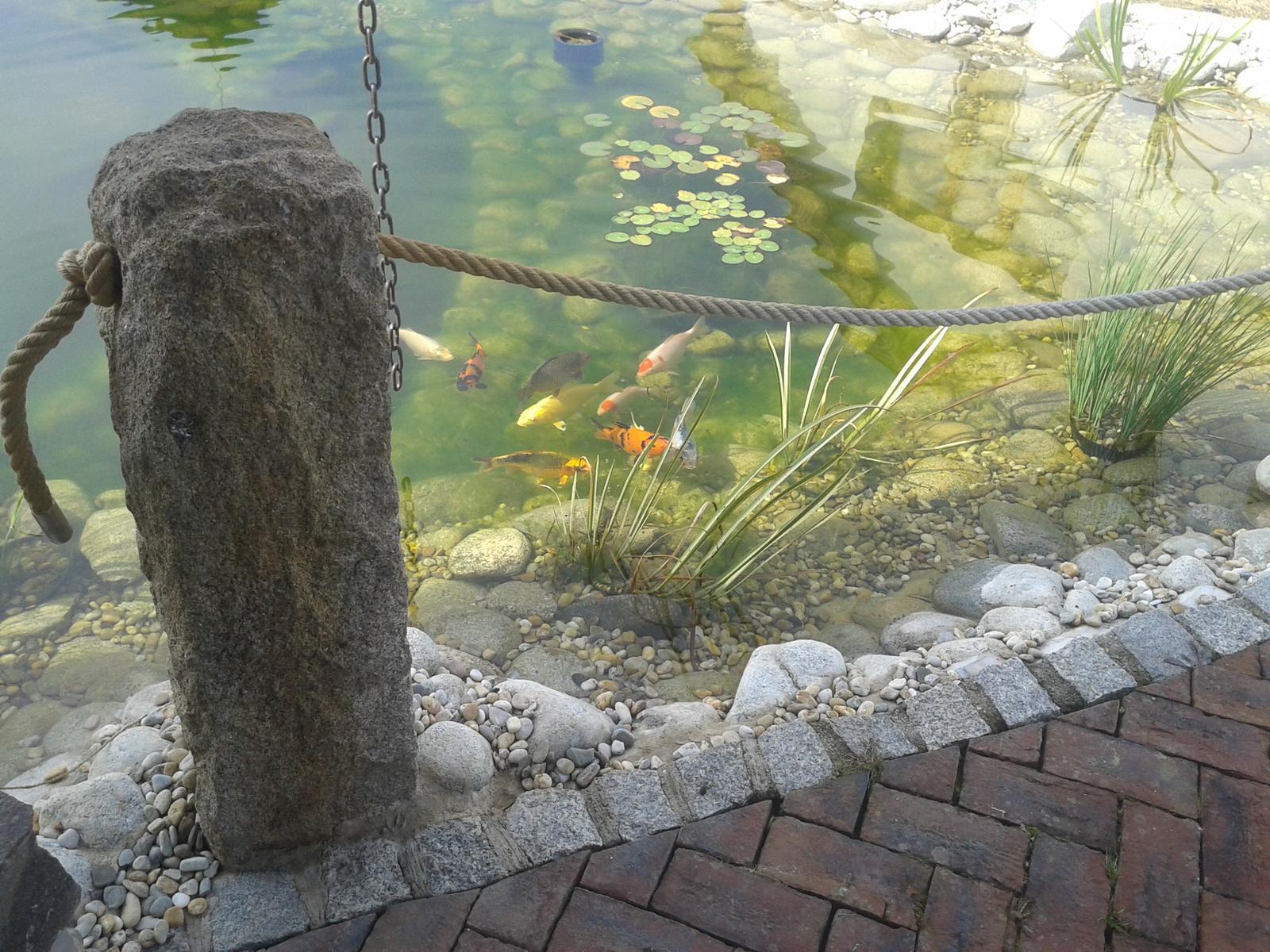 Exterier zahrada - naše žraloky