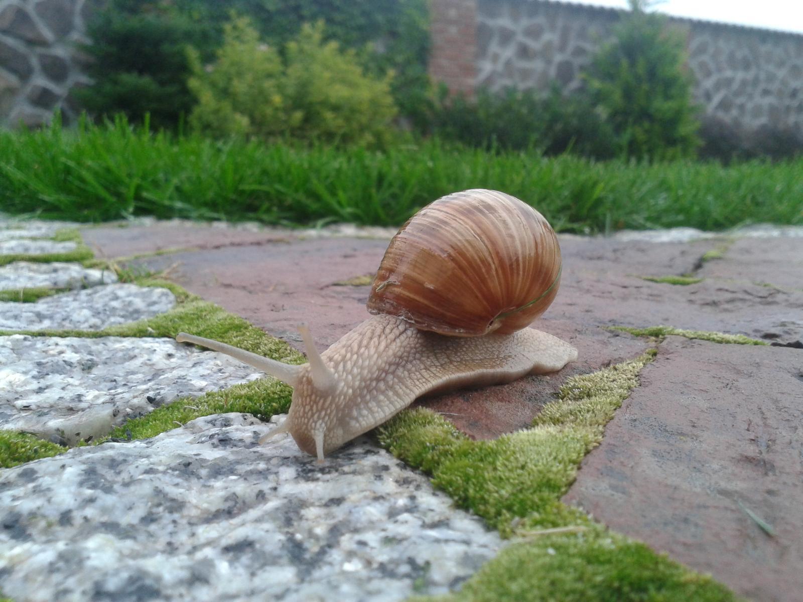 Exterier zahrada - mali sme navštevu