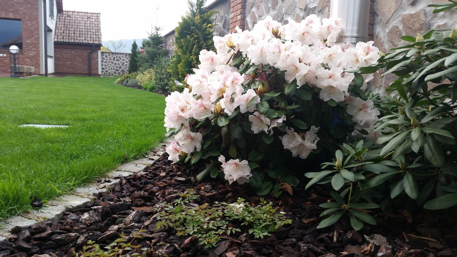 Exterier zahrada - Obrázok č. 85