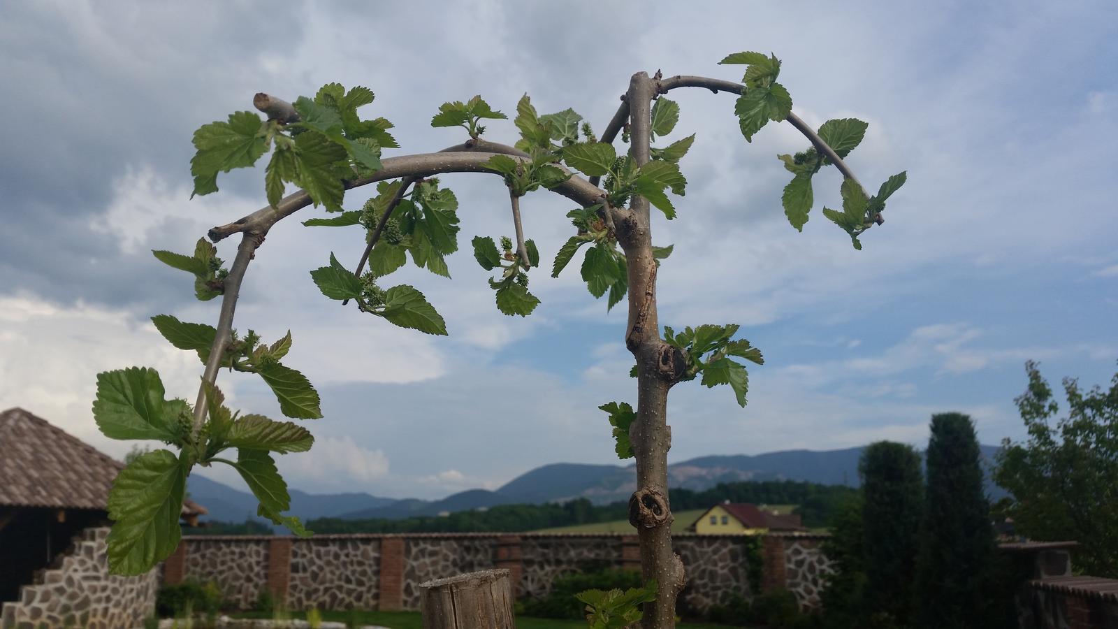 Exterier zahrada - ...a bude aj úroda...dúfam☺