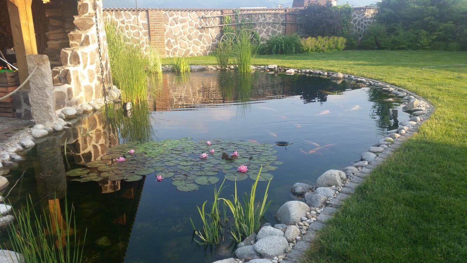 Exterier zahrada - Rozkvitnute lekna...