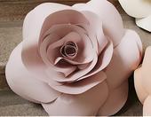 Papírová růže pudrová,