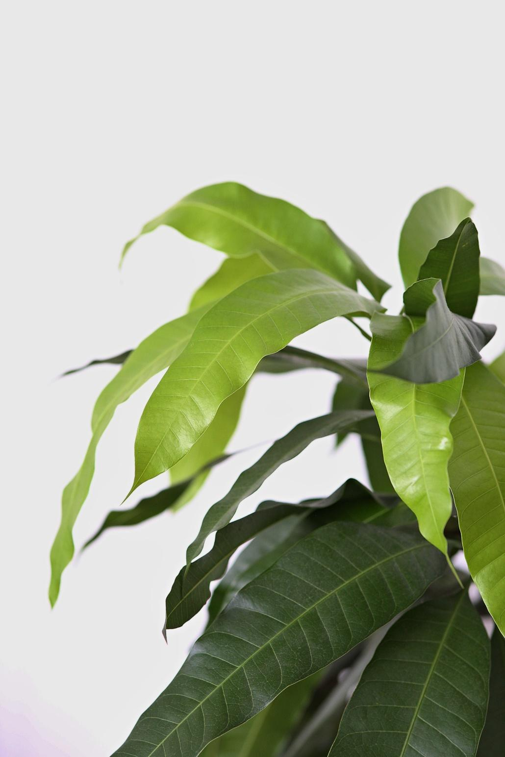 Bez rostlin to nejde... - Obrázek č. 4