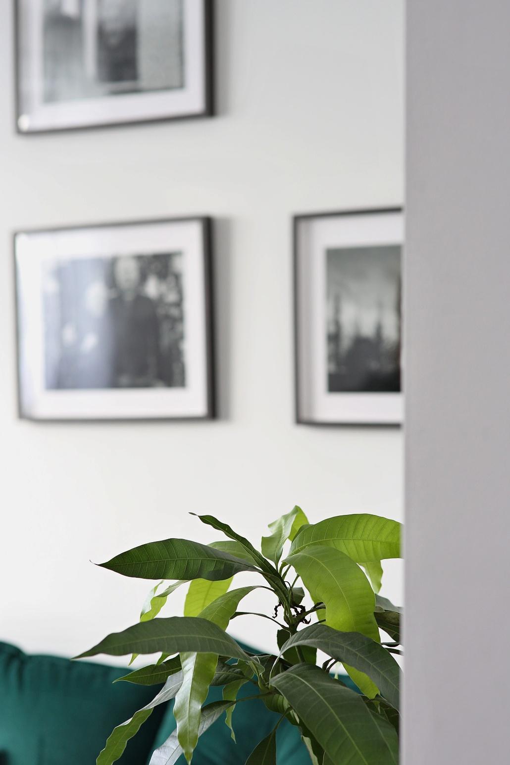 Bez rostlin to nejde... - Obrázek č. 3