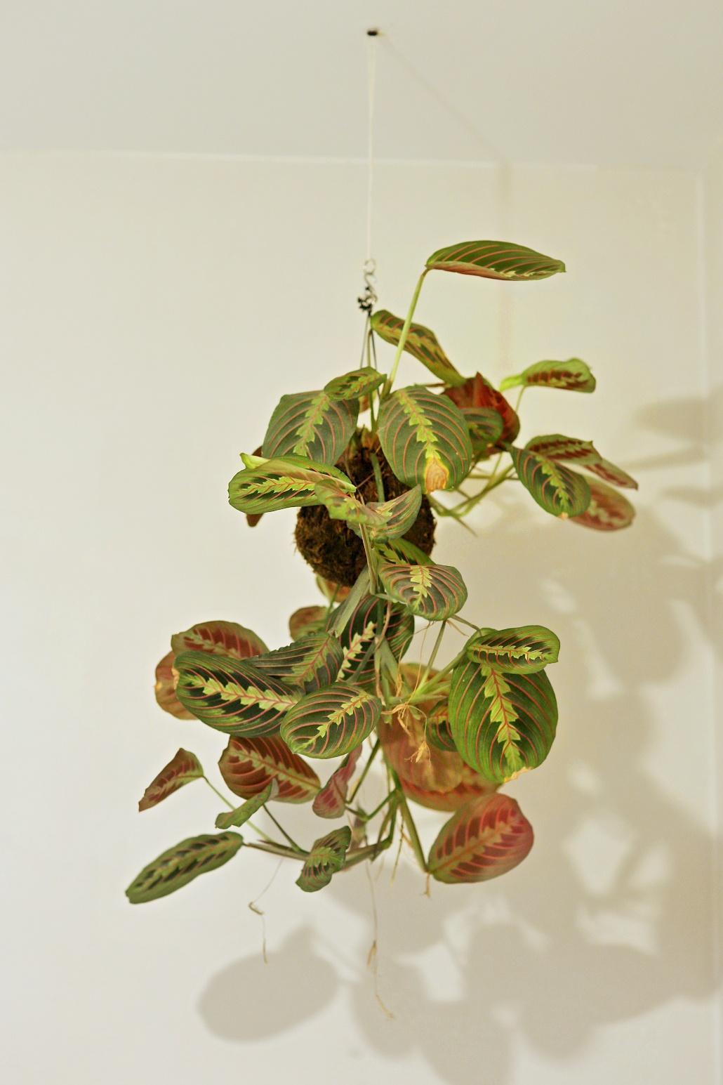 Bez rostlin to nejde... - Obrázek č. 8