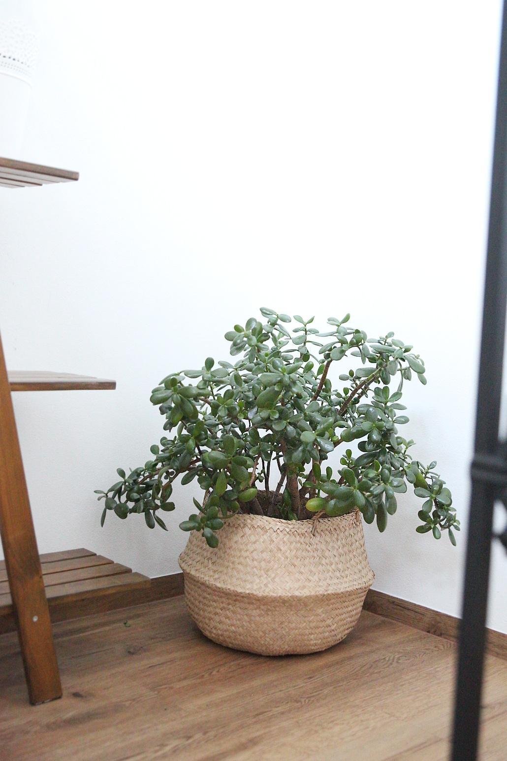 Bez rostlin to nejde... - Obrázek č. 6