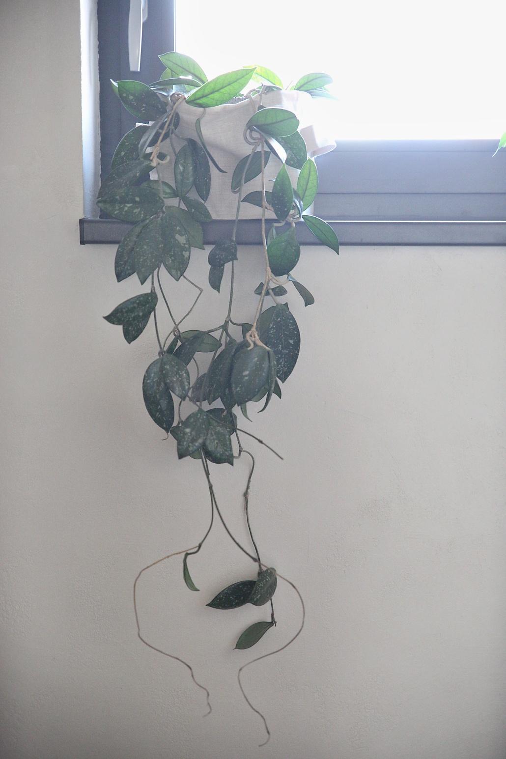 Bez rostlin to nejde... - Obrázek č. 10