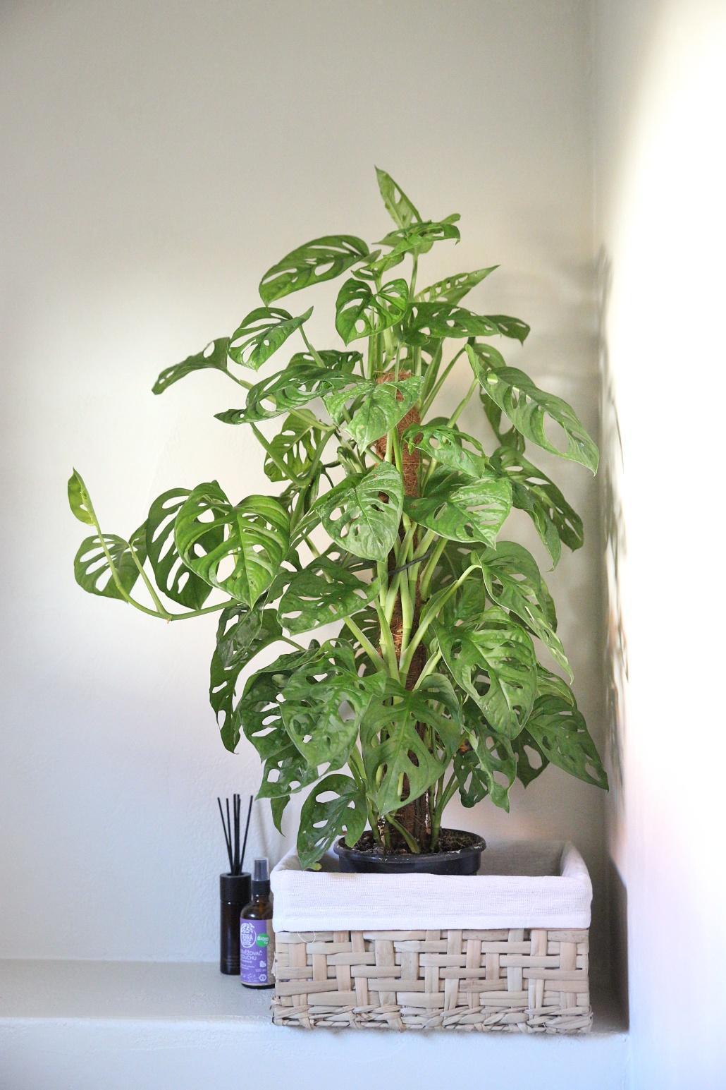 Bez rostlin to nejde... - Obrázek č. 9