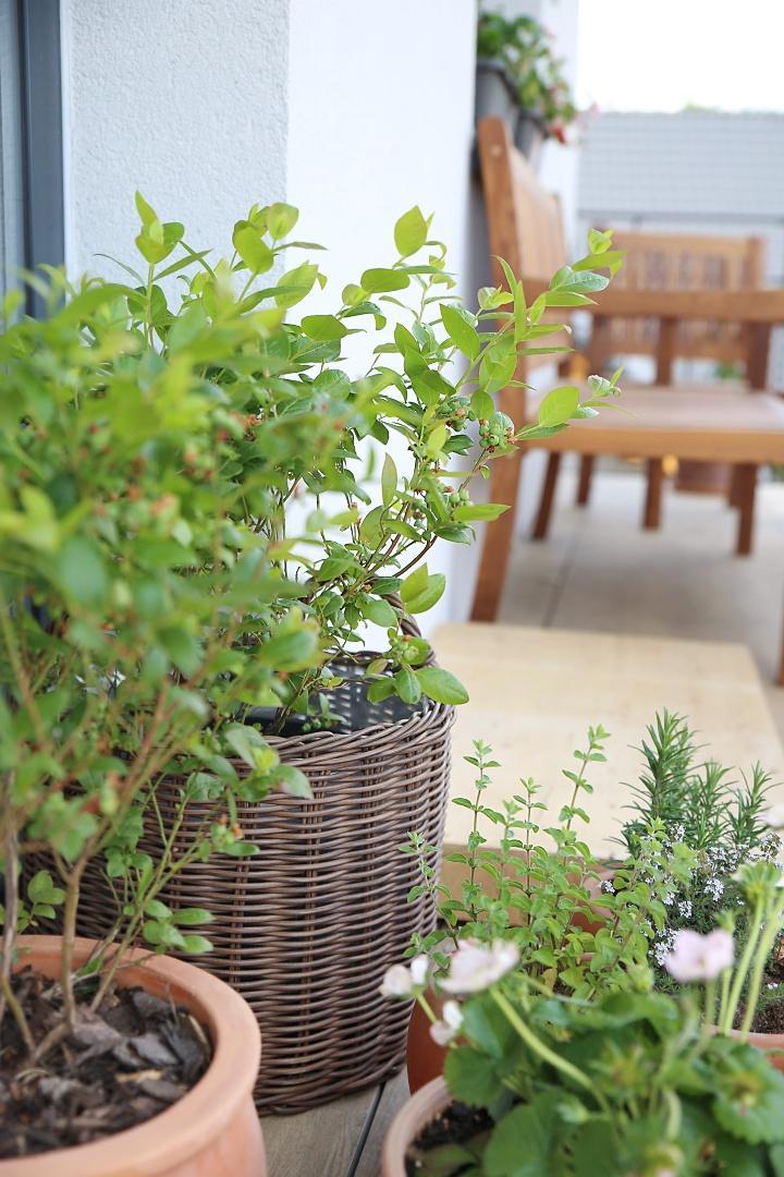 Bez rostlin to nejde... - Obrázek č. 11