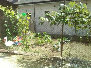 Konečne trochu času a medzi koooooopou buriny som našla tri kapusty a dve cukety a uhorky :-D