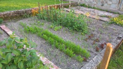 zeleninová část už osázená