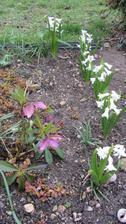 hyacinty z loňského velikonočního košíku