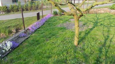 záhon kolem plotu