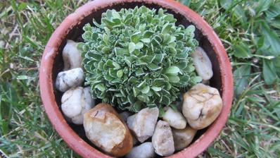 osázela jsem staré kameninové misky ukořistěné ve sběrném dvoře