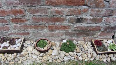 minulý týden osázené misky, dnes nasbírané kamínky