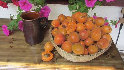 meruňky sklizeny