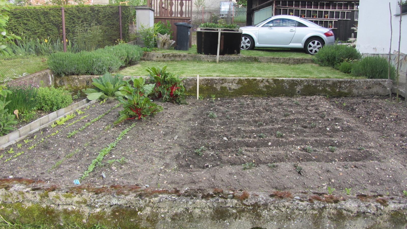 Zahrada 2016 - oddělení zeleniny :-)