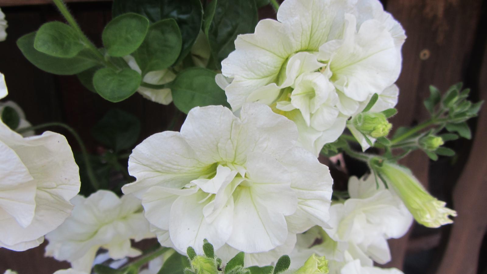 Zahrada 2016 - Obrázek č. 97