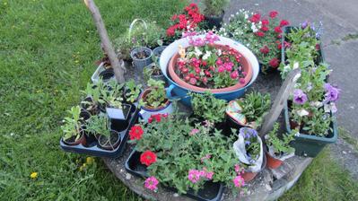 na to, že furt skuhrám, že už nemám místo na zahradě, jsem to s nakupováním zase trochu nevychytala :-)