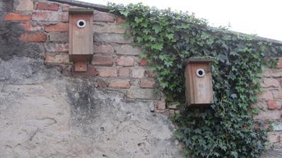 sýkorníky - vlevo je máma a 10 vajíček a vedle bydlí asi táta :-)