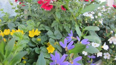 truhlíky bují a kvetou