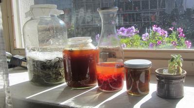 Na případné zimní neduhy jsme připraveni - zleva: šalvějový sirup, základ na šípkový likér (naloženo v rumu), základ na šípkový likér (naloženo ve vodce), měsíček lékařský v oleji (základ na krém) a rýmovník.