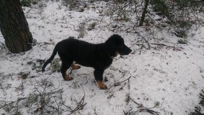 momentálně nejdůležitější činnost - běhání po lese se psem, kterého nám přinesl Ježíšek :-)
